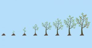 Vector illustration of tree growth isolated on white